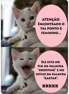Aaaa gatos