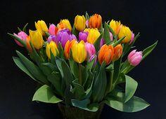 https://www.flickr.com/photos/c-s-n/6904325410/in/pool-tulips