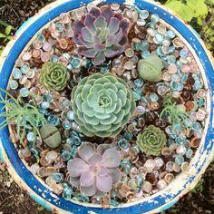 My birdbath of succulents!
