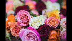 Types of Roses for Your Plant Installation in Philadelphia Rose Images, Flower Images, Flower Pictures, Rose Color Meanings, Flower Meanings, Yellow Roses, Pink Roses, Rose Flowers, Flower Colors