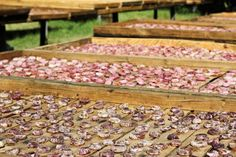 A farm in the Karoo grows figs for the fresh fig market, as well as dried fig products and fig jams. No sprays are used on the figs on this farm. Dried Figs, Fresh Figs, Fig Jam, Potted Trees, Organic Recipes, Pots, Food Photography, Heaven, Outdoor Decor