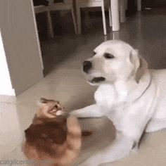 Cat Harassing Dog and Being a Jerk