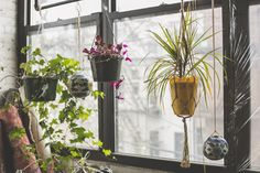 Indoor Garden in the Windowsill of an Apartment in Bushwick, Brooklyn Indoor Garden, Indoor Plants, Horticulture, Urban Lifestyle, Brass Curtain Rods, Types Of Window Treatments, Plant Lighting, Gardens