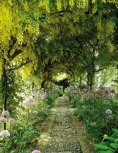 An 'avenue' of Laburnums at Barnsley House.  Self-taught British designer Rosemary Verey created this tunnel of laburnum and wisteria at her home at Barnsley House in Gloucestershire, England. During her career she also worked on commissions for Prince Charles and Elton John.