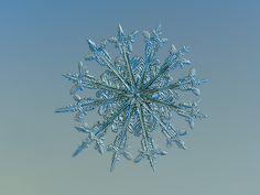 Twelve months, real snowflake macro photo on glass with LED back light - Alexey Kljatov