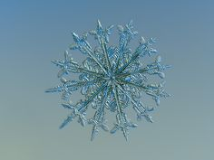 Twelve months, real snowflake macro photo on glass with LED back light - Alexey Kljatov