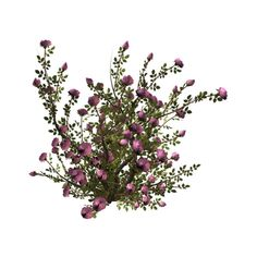 R11 Garden Design 2011 Bush 009.png ❤ liked on Polyvore featuring flowers, plants, bushes, nature and filler