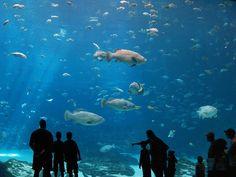 work at an aquarium