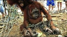 Petizione · Facebook: No to palm oil in £20 notes · Change.org