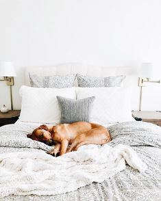 Never been so jealous in my entire life😍 Time for you to cozy up too — Overstock is having a BIGGG sale, and you can shop it from the comfort of your own covers. Head to the link in our bio to see what's in our shopping carts! Cute Baby Animals, Animals And Pets, I Love Dogs, Puppy Love, Cute Puppies, Cute Dogs, Brown Pillows, Puppy Pictures, Dog Mom