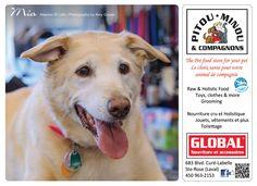 Mia 2013 Calendar, Fundraising, Labrador Retriever, Dogs, Animals, Pets, Toy, Labrador Retrievers, Animales