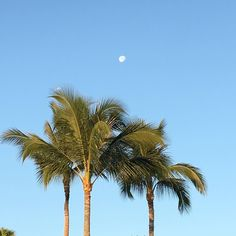 Moon sets over the palm trees in beautiful Waikaloa Beach Hawaii.  #hawaii #bigisland #bigislandhawaii  #thrujimseyes  #jimthetraveler #picoftheday #photooftheday #instadaily #travel #life #beautiful #photo #instagram #beauty #waikoloabeach #sun #summer #beach