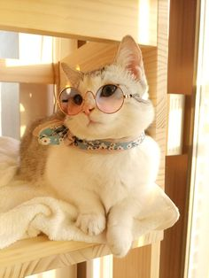 Super Cute Kittens Meowing to Cute Animals Wallpaper Cartoon out Cute British Shorthair Kittens For Sale like Cute Kittens And Puppies Doing Funny Things Pretty Cats, Beautiful Cats, Cute Kittens, Cats And Kittens, Baby Cats, Kittens Meowing, Ragdoll Kittens, Bengal Cats, I Love Cats