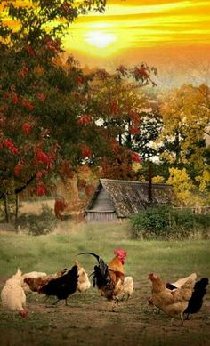 Chickens in the country Country Farm, Country Life, Country Living, Country Roads, Beautiful Birds, Beautiful Places, Beautiful Pictures, Peaceful Places, Beautiful Farm