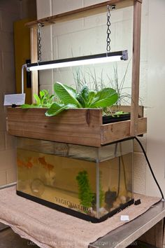Free aquaponics course garage aquaponics system,home aquaponics self-cleaning fish tank aquaponics how to make a bell siphon,commercial aquaponics fish farming aquaponics for education.