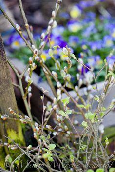 Blomsterverkstad: Framtidstro