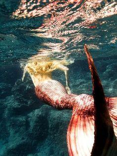 ♒ Mermaids Among Us ♒ art photography & paintings of sea sirens & water maidens - Real Mermaids, Mermaids And Mermen, Mermaids Exist, Sirens, Mythical Creatures, Sea Creatures, Mythological Creatures, Foto Poster, Mermaid Tails