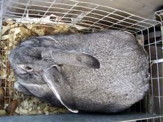 """What about rabbit meat? Blog post highlighting lean rabbit meat for the table."" @Caitlin Burton Kinser we eat sebs??"