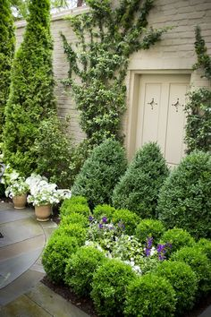 50 Fantastic Modern Garden Architecture Design Ideas - Page 3 of 50 - puredecors Boxwood Garden, Evergreen Garden, Garden Shrubs, Shade Garden, Evergreen Vines, Evergreen Landscape, Diy Garden, Front Yard Landscaping, Backyard Landscaping