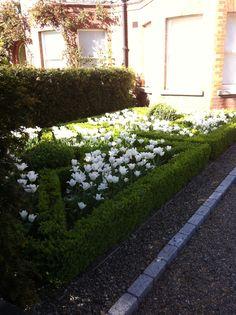 White tulips in a Dublin garden White Tulips, Dublin, Beautiful Flowers, Sidewalk, Gardens, Side Walkway, Outdoor Gardens, Walkway, Walkways