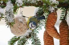 Vogelfutter selber machen: wie Sie Piepmätze verwöhnen