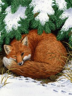 Caroline's Treasures Fox Nap Time Flag Canvas House Size at Lowe's. Heavy Duty Polyester House Size Flag that measures approximately 28 x 40 inches. This is a sleeve pole flag that will fit a standard decorative flag pole. Wooden Flag Pole, Fox Fabric, Evergreen Flags, Flag Stand, Glass Cutting Board, Cutting Boards, Fox Art, House Flags, Flag Decor