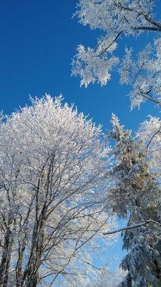 Cold blue sky. Winter in Latvia.