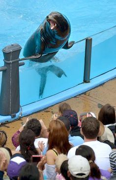 The seal and sea lion show at SeaWorld San Diego brings the humans and animals close together.