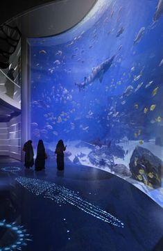 Arabian Peninsula Tank at National Aquarium of Saudi Arabia