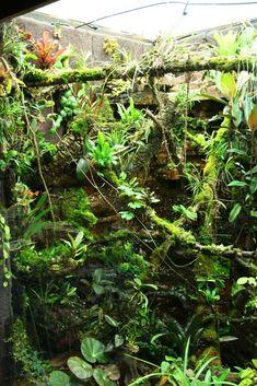 Click the image to open in full size. Planted Aquarium, Glass Aquarium, Aquarium Fish, Gecko Terrarium, Terrarium Reptile, Chameleon Enclosure, Reptile Enclosure, Crested Gecko Vivarium, Reptile Room