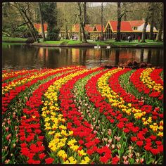 Keukenhof in Lisse, Zuid-Holland Lisse, Netherlands
