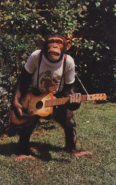 chimp the poor chip they are actually really brutal when the males fight for their side. They actually can rip another chimp to pieces. Monkey See Monkey Do, Ape Monkey, Monkey Art, Animals And Pets, Funny Animals, Cute Animals, Primates, Planet Of The Apes, Monkey Business