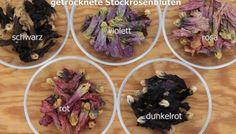 Färben mit verschiedenen Stockrosen
