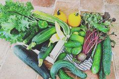 oogst , groentetuin , moestuin , komkommer , courgette , rode biet , peper , augurk , paprika , boerenkool , serre , homegrown , groenten , Marjolein Kookt , makkelijk recept