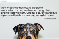 cytaty o psach I Love Dogs, Portal, My Love, Memes, Animals, Minimalist, Animales, Animaux, Animal Jokes