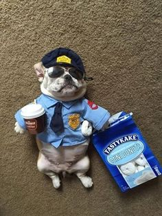 Officer Dibble? French Bulldog Security❤️