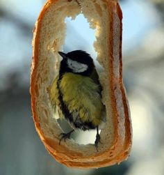 Cool idea ~ rather than throw out old stale bread, hang it in a tree for the birds to enjoy!