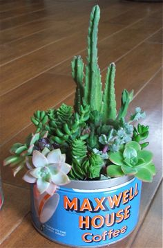 succulents in mason jars -