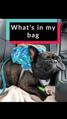 School Backpack Cute French Bulldog Large Capacity Bag for Travel Outdoor Sports Boys Girls Teenage