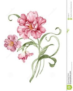 watercolor-illustration-flower-set-simple-white-background-51532171.jpg (1043×1300)