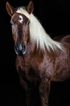 Eqwww.pegasebuzz.com | Equestrian Photography : Jörn Reiter