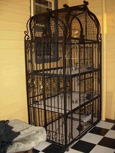 The Canary Files - birdcages and aviaries - your responsibilities Backyard Birds, Chickens Backyard, Cockatiel Cage, Diy Bird Cage, Antique Bird Cages, Jungle Bedroom, Cat Hotel, Gothic Garden, Bird House Kits