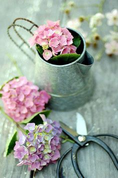 Hydrangea and gardening tools Flower Power, My Flower, Bouquet D'hortensia, Bouquets, Hortensia Hydrangea, Pink Hydrangea, Hydrangea Garden, Vibeke Design, Arte Floral