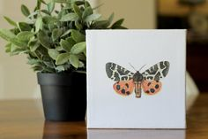 Butterfly on Canvas
