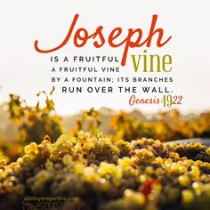 Genesis 49:22-26 Bible study, Joseph's blessing | christine's bible study at alittleperspective.com