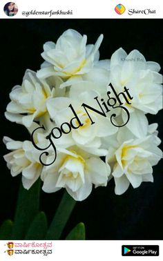 Good Night Quotes, Happy Birthday, How To Get, Allah, Holiday, Flowers, Nighty Night, Beautiful Flowers, Bonito