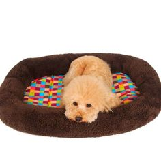 ALUS-Teddy pet nest dog dog mat mattress sofa cushion small dogs Bichon puppy chihuahua kennel mat summer ** Discover this special cat product, click the image : Cat tower