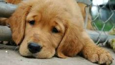 Sette rimedi casalinghi per la cura del cane