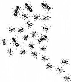 24 meilleures images du tableau fourmis fourmis insectes et tatouage insecte - Dessin de fourmi ...