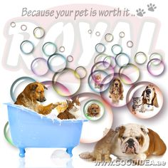 Because your pet is worth it.